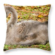 Black Swan Cygnet Throw Pillow
