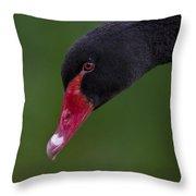 Black Swan Series - 3 Throw Pillow