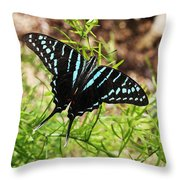 Black Swordtail Butterfly Throw Pillow