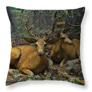 Black Tail Deer Throw Pillow