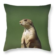 Black-tailed Prairie Dog Sitting Upright Throw Pillow