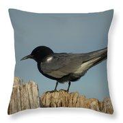 Black Tern Throw Pillow