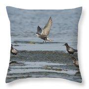 Black Terns Throw Pillow