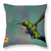 Black-throated Brilliant Throw Pillow