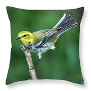 Black-throated Green Warbler, Female Throw Pillow