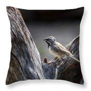 Black Throated Sparrow Throw Pillow