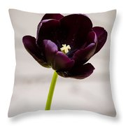 Black Tulip Throw Pillow