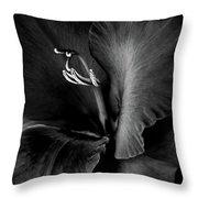 Black Velvet Gladiolia Flower Throw Pillow by Jennie Marie Schell