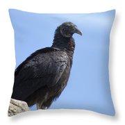 Black Vulture - Coragyps Atratus  Throw Pillow