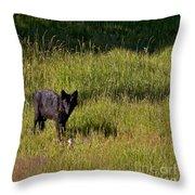 Black Wolf   7251 Throw Pillow