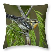 Blackburnian Warbler Throw Pillow