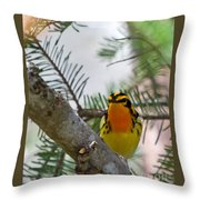 Blackburnian Warbler Looking At You Throw Pillow