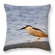 Blackcrowned Night Heron Throw Pillow