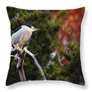 Blacked-capped Night Heron #3 Throw Pillow