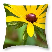 Blackeyed Susan Throw Pillow