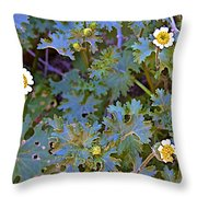 White Wooly Daisies On Borrego Palm Canyon Trail In Anza-borrego Desert State Park-ca Throw Pillow
