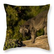 Blackie Throw Pillow