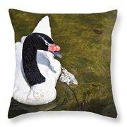 Blacknecked Swan Throw Pillow