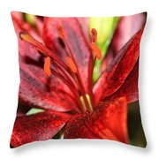 Blackout Asiatic Lily Throw Pillow