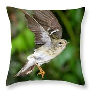 Blackpoll Warbler Throw Pillow