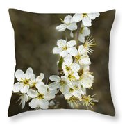 Blackthorn Or Sloe Blossom  Prunus Spinosa Throw Pillow