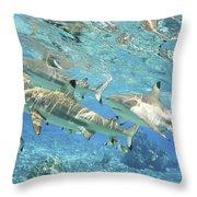 Blacktip Reef Shark Throw Pillow