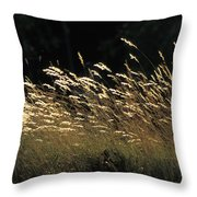 Blades Of Grass In The Sunlight Throw Pillow by Jim Holmes