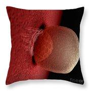 Blastocyst 6-8 Days Throw Pillow
