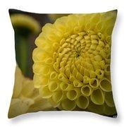 Blazing Yellow Dahlia Throw Pillow