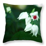 Bleeding Heart Vine Blossom Throw Pillow