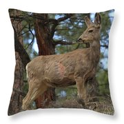 Blending In The Rockies Throw Pillow