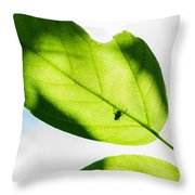 Blessed Days Of Warmth And Sun Throw Pillow