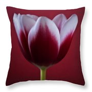 Abstract Red White Flowers Tulips Macro  Photography Art Throw Pillow
