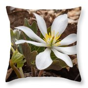 Blood Root 1 Throw Pillow