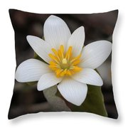 Bloodroot Beauty Throw Pillow