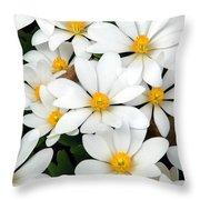 Bloodroot Blooms Throw Pillow
