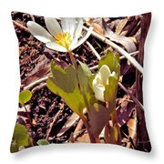 Bloodroot Reaching For The Spring Sun Throw Pillow