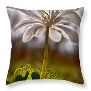 Bloodroot Throw Pillow
