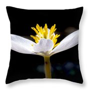 Bloodroot Throw Pillow by Steven Ralser