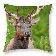 Bloody Elk Throw Pillow