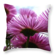 Bloom Pink Daisies Throw Pillow