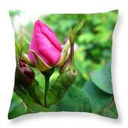 Bloom Wild Rose Bud Throw Pillow
