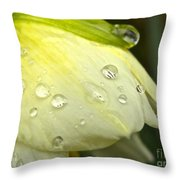 Blooming Daffodil With Raindrops Throw Pillow