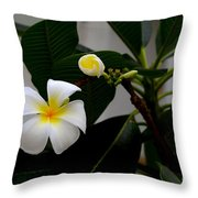 Blooming Frangipani Flower Alongside Bud Throw Pillow