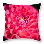 Blooming Red Flower Throw Pillow by John Wadleigh