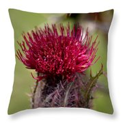 Blooming Spear Thistle Throw Pillow