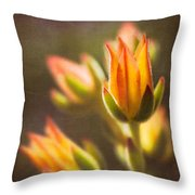 Blooming Succulents V Throw Pillow