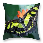 Blooms And Butterfly5c Throw Pillow