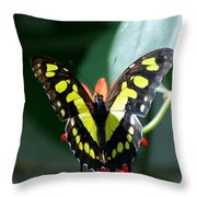 Blooms And Butterfly6c Throw Pillow