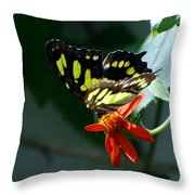 Blooms And Butterfly7c Throw Pillow